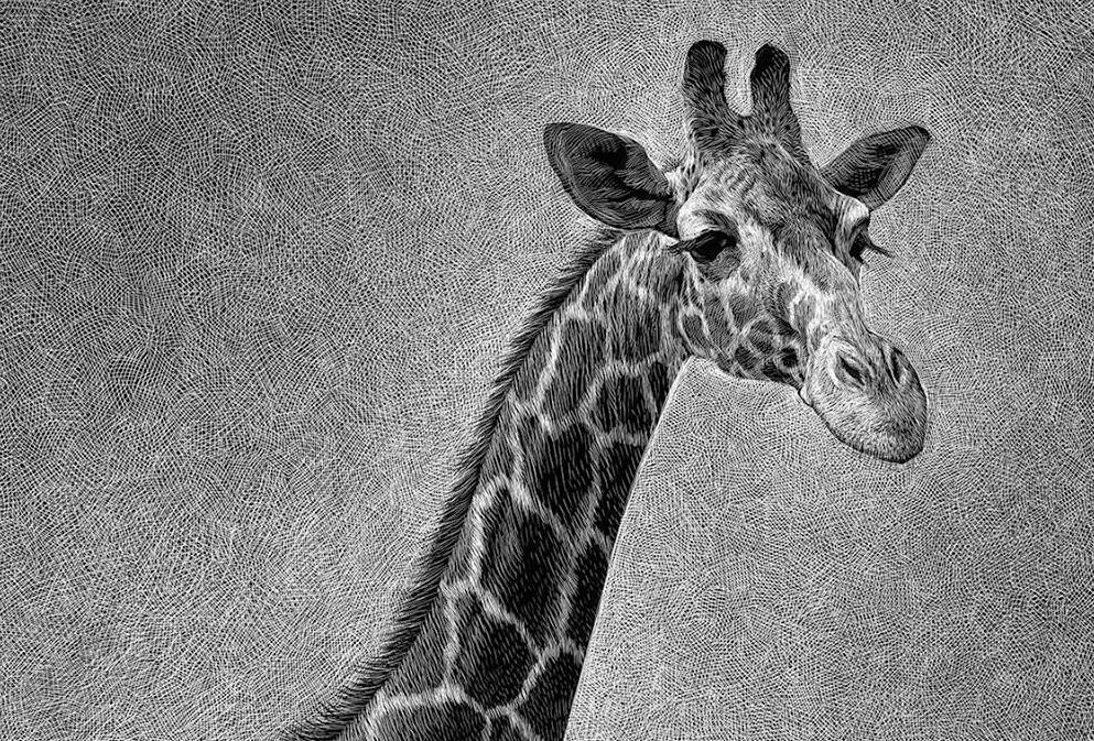 Джунгли Jungle / Ricardo Martinez
