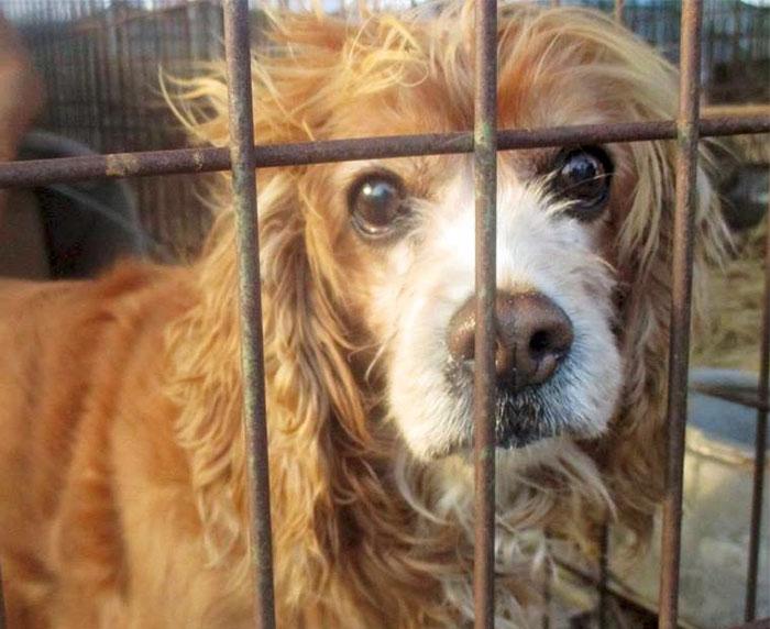 Рынок Моран был печально известен активистам по защите прав животных во всем мире из-за жестоких мет