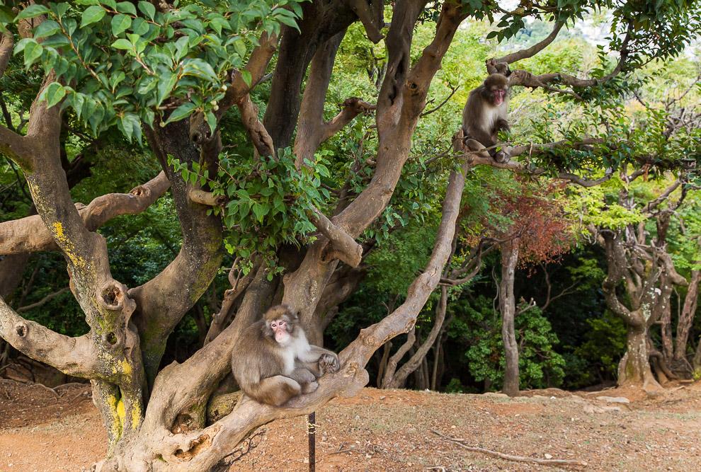 14. В парке живет около 170 обезьян.