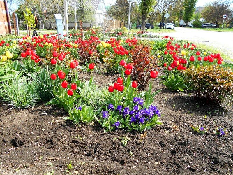 Цветы, в апреле ... DSCN5191.JPG