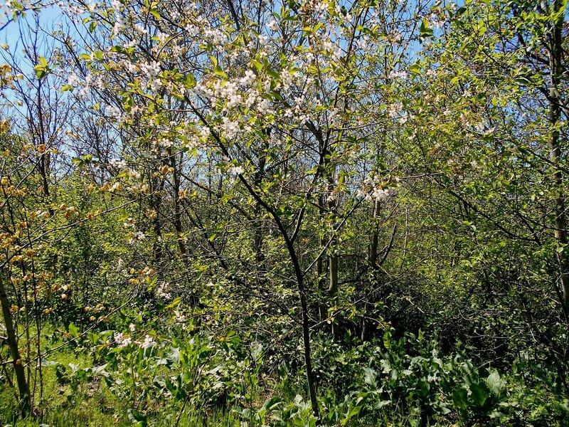 В лесу... Апрель ... DSCN5288.JPG