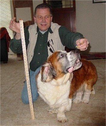 Необычные собаки - миксы пород и редкие окрасы 0_6e5c6_f672797a_L