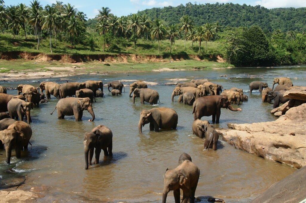 38 Слонов, а может и не 38