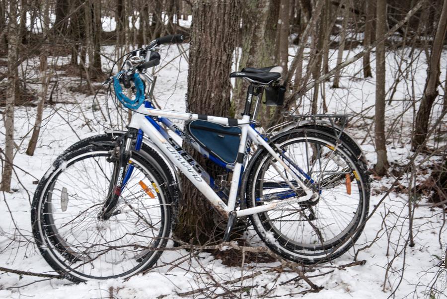 пристегнутые к дереву велосипеды