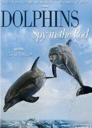 Дельфины. Шпион в стае (2014)