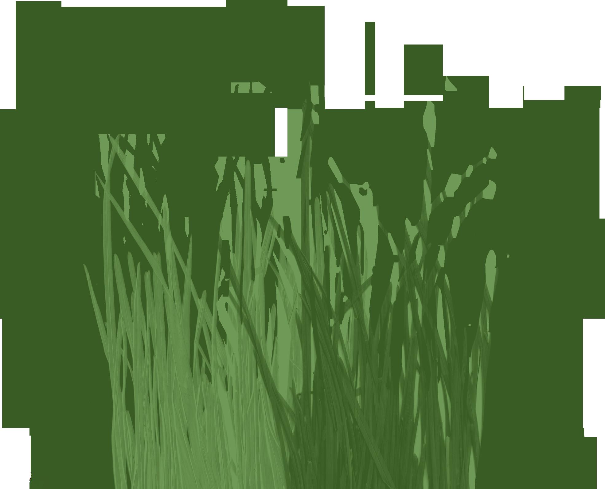 Сайт трава цветов