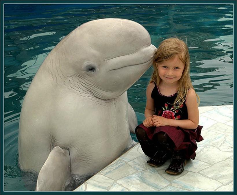 Беременная женщина и дельфин акушер 0 12e23f da4ee03 orig