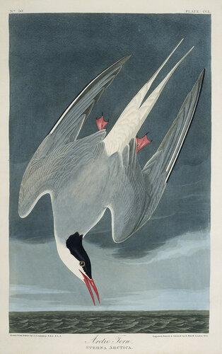 audubon-Pl-250.jpg