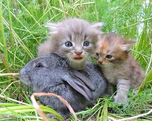 Василёк 2015. Котята и крольчонок