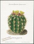 Echinocactus viridescens Nutt