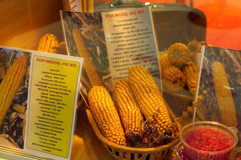 Сорт кукурузы ПОРУМБЕНЬ 458 (среднепозднеспелый)