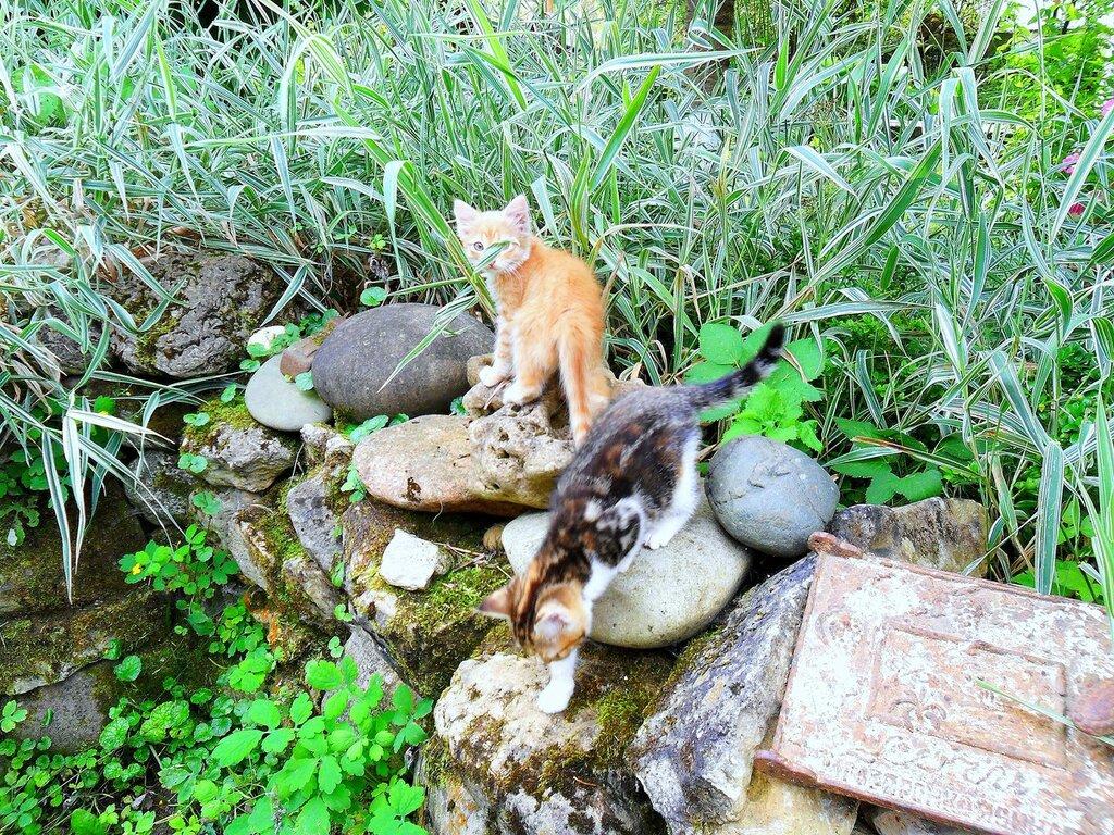 Исследователи на камнях ... SAM_0588.JPG