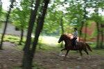Коняшки 1