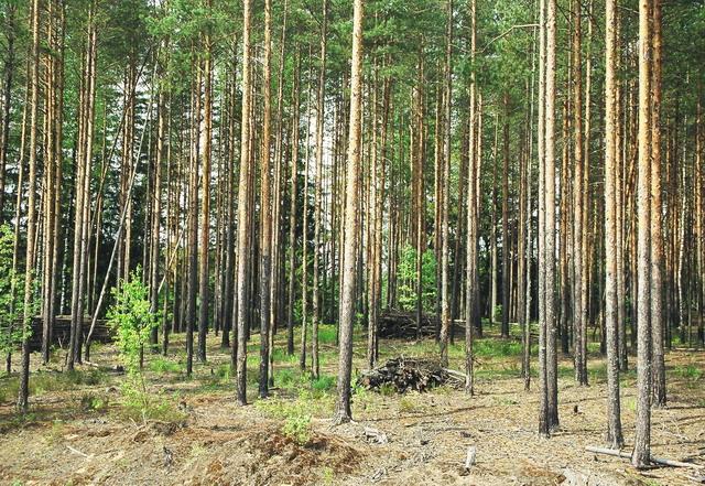 Текст песни юрий щербаков - за лесом солнце просияло