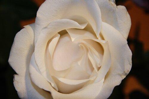 Как сделать так чтобы роза дольше стояла в воде