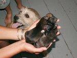 Катушкины щенки