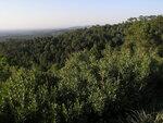 Заповедный лес Бусаку