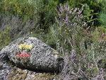 Метка тропы на камне