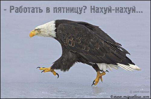Орел!.jpg
