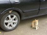wheel_cats_resize.jpg