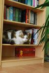 Книжный кот...