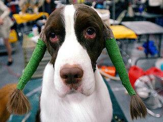 В Великобритании появились первые в мире духи для собак