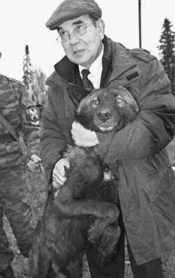 """Профессор Вячеслав Касимов и его """"волкособ"""" Борей. Черный окрас животного говорит о преобладании в его организме волчьих генов"""