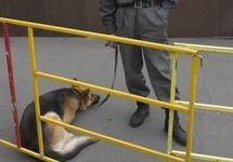 Служебных собак Внутренних войск оденут в бронежилеты