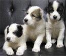 Развитие российского рынка кормов для домашних животных