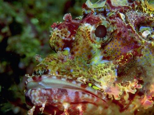 Подводный мир рыбы подводные