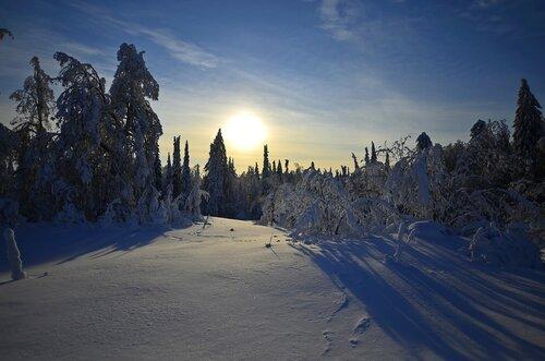 Такой лес у горы Белой.