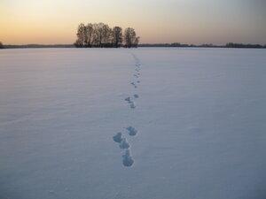заячьи следы на снегу