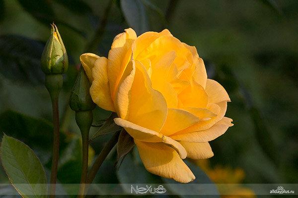 Я люблю все цветы, часть 56.