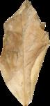 ial_csh_leaf1.png