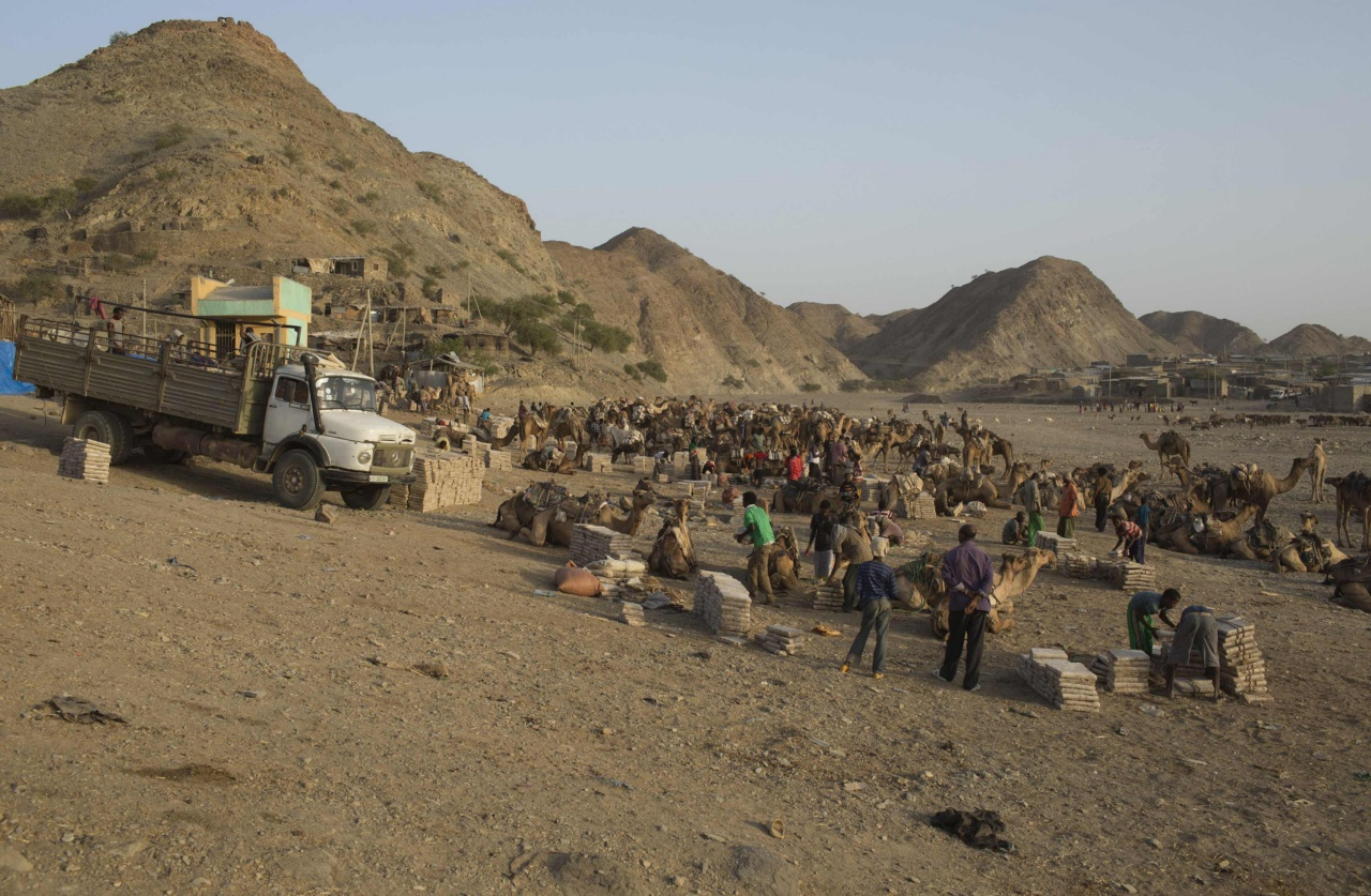 Workers unload slabs of salt from camels in the town of Berahile in Afar, northern Ethiopia