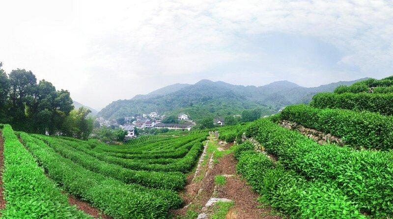 杭州市龙井村 Ханчжоу, деревня Лунцзин