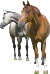 horse_2014 (3).png