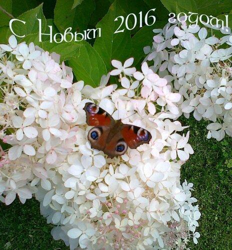 hydrangea01-2016.jpg