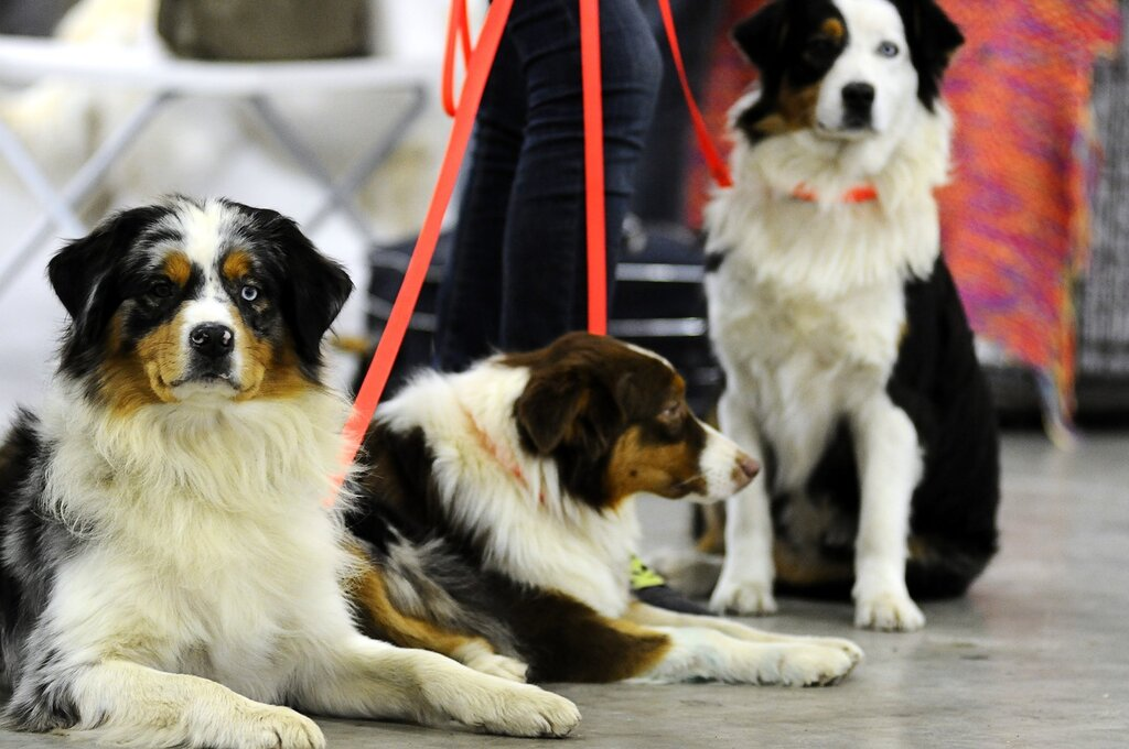 Выставка собак «Россия 2013»