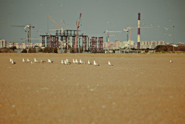 белые чайки на песке у Финского залива