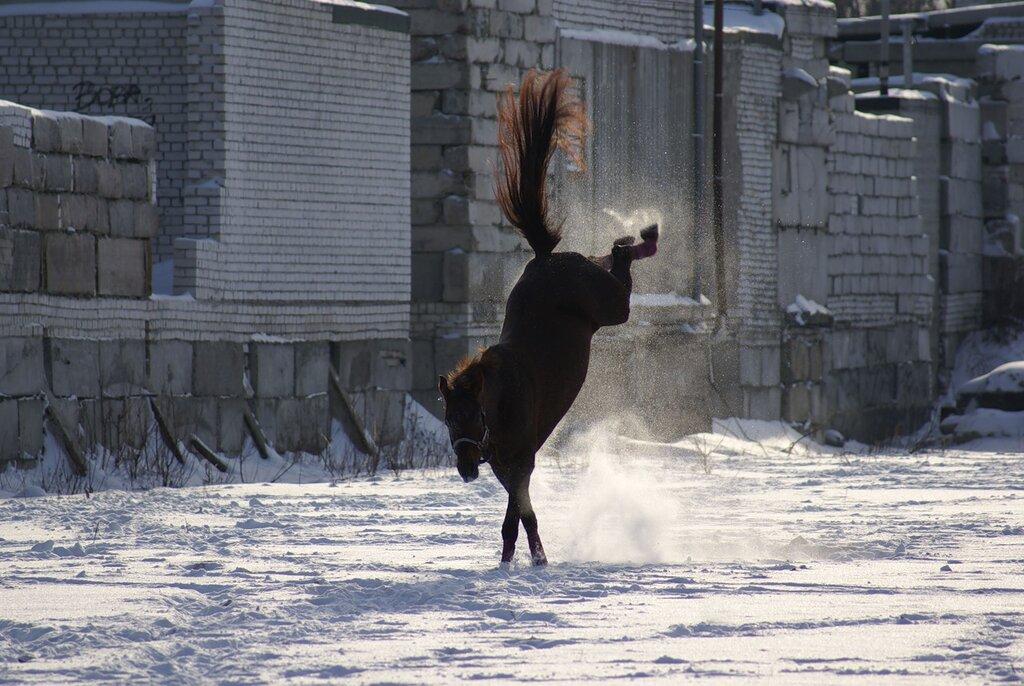 яндекс фото лошади 2