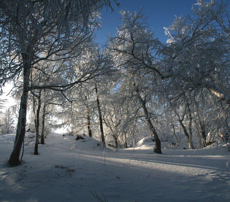 Морозным днём ...