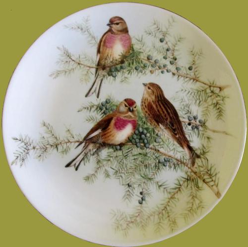 Картинки по запросу тарелки с фото пнг