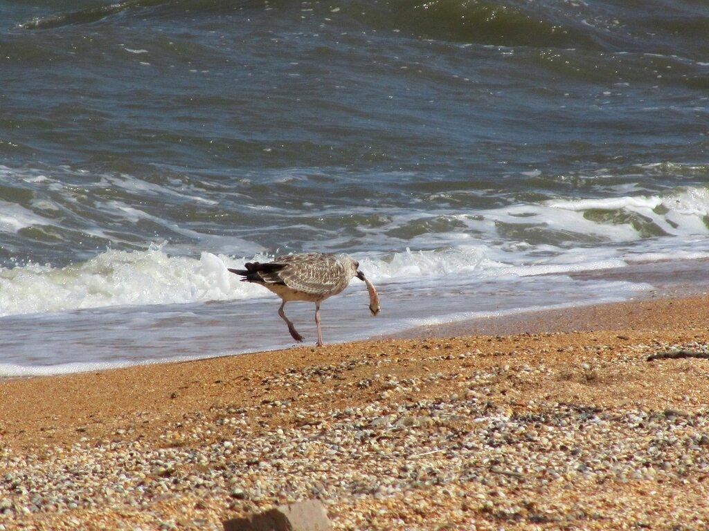 Птицы азовского моря фото с названиями