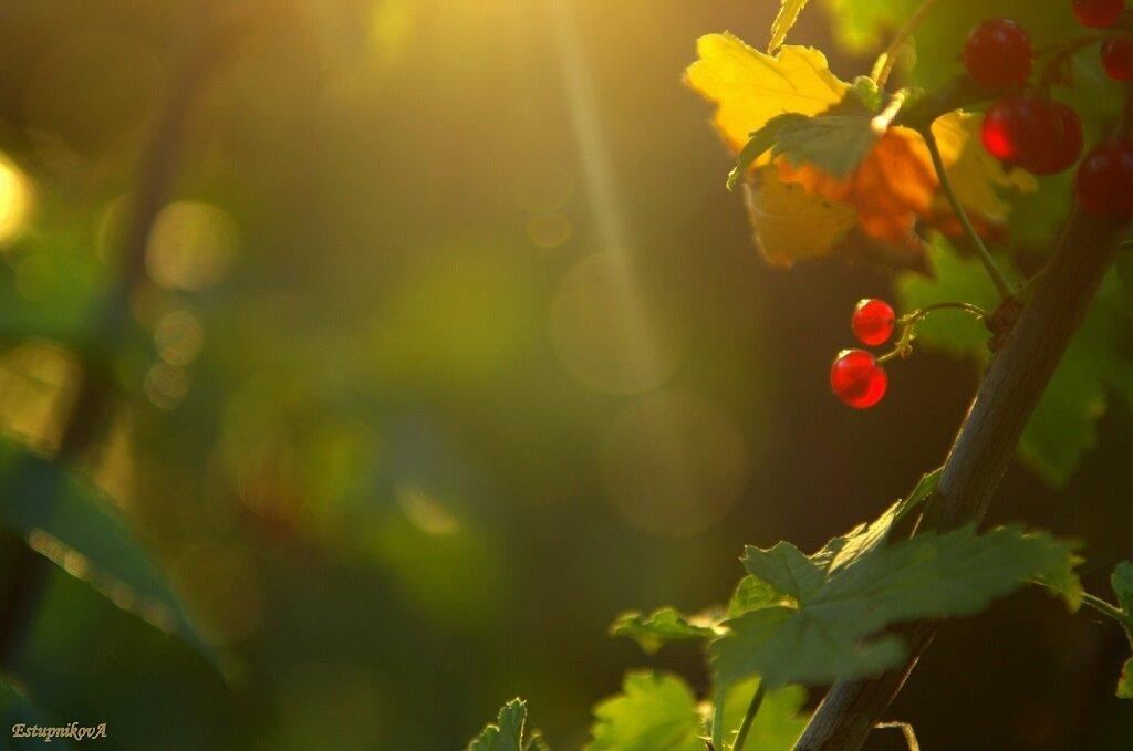 Фотография 3. Если Nikkor 50/1.8G поймает правильный свет, то можно снять почти шедевр на камеру Nikon D3100