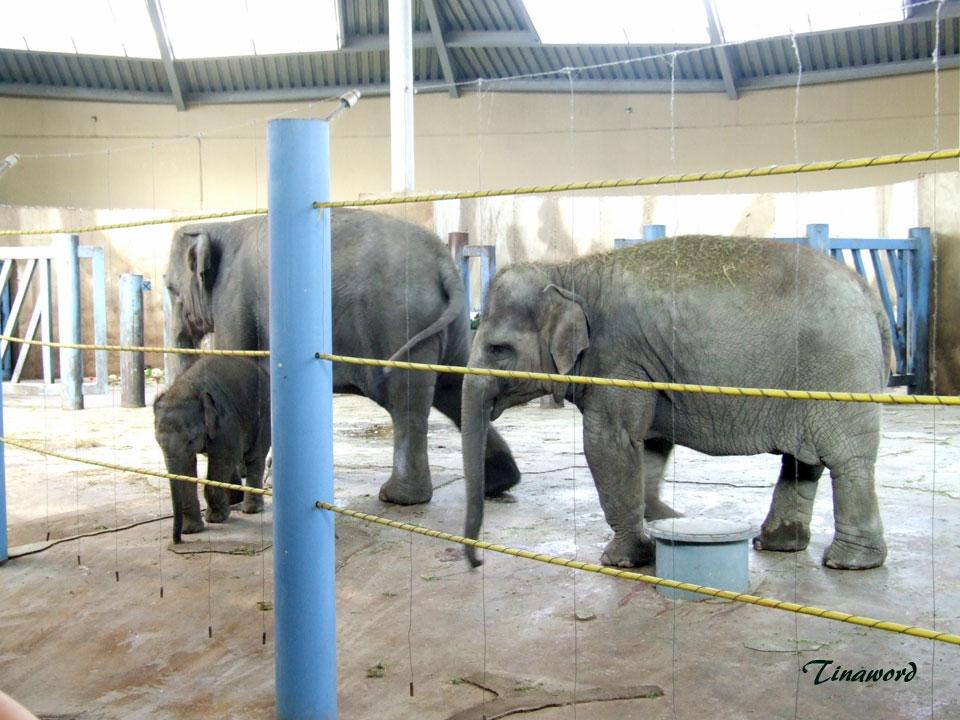 зоопарк-65.jpg