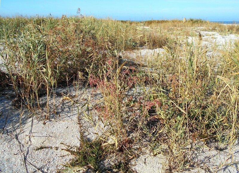 Растительность, октябрь у моря... DSCN1707.JPG