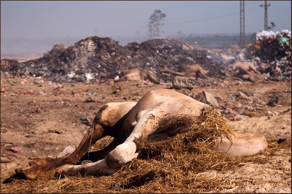 Каир. Верблюжий рынок. Октябрь 2010. Фотоотчет.