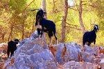 РОДОС: 16.12.2010 Перевал