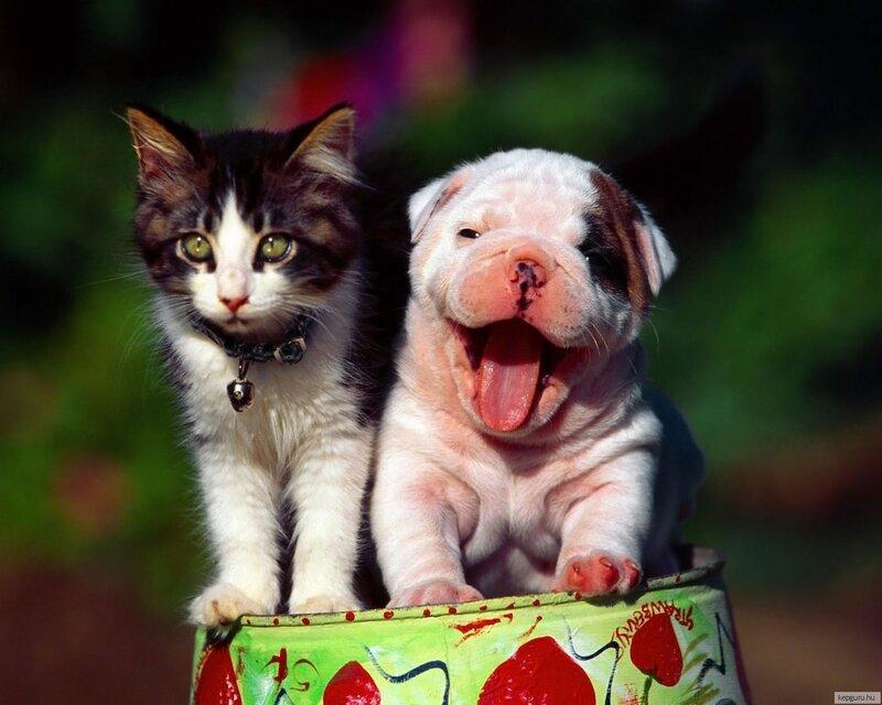 кошачье
